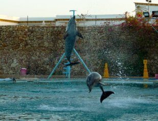 2_dolphins