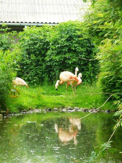flamingi_by_alauna