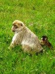 monkeys_by_alauna